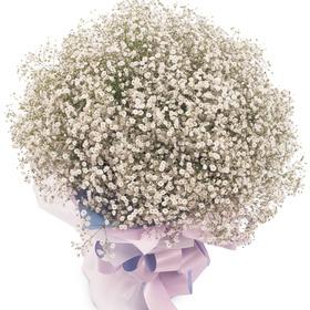 안개꽃다발 p1001