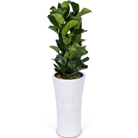 떡갈나무 m1020