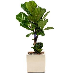 떡갈나무 m1793