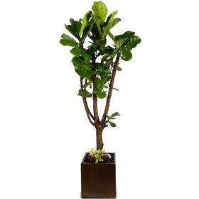 떡갈나무 m2113