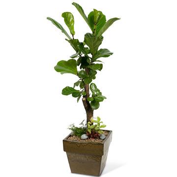 떡갈나무 m1523