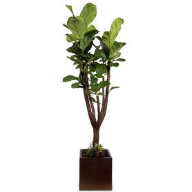 떡갈나무 m2111