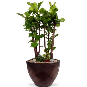 떡갈나무 m2110