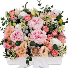 꽃상자 p3060