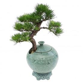 도자기소나무분재m630