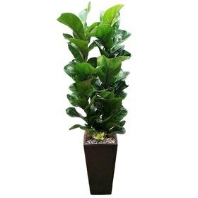 떡갈나무 m2092