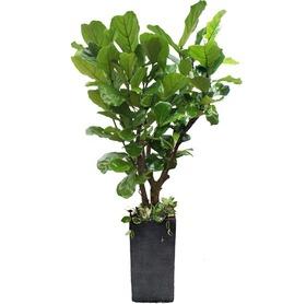 떡갈나무 m2093